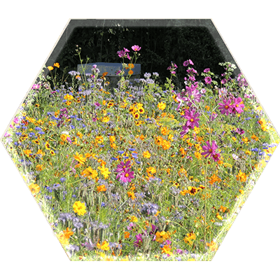 bijen lunch box