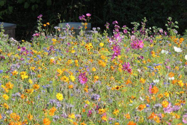 Bloemenperk voor bijen